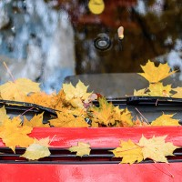 Fall Windscreen Protection Tips